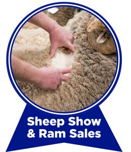 sheep-show-ram-sales